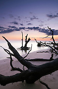 Washed up trees on the beach of Big Talbot Island, Jacksonville, at sunrise