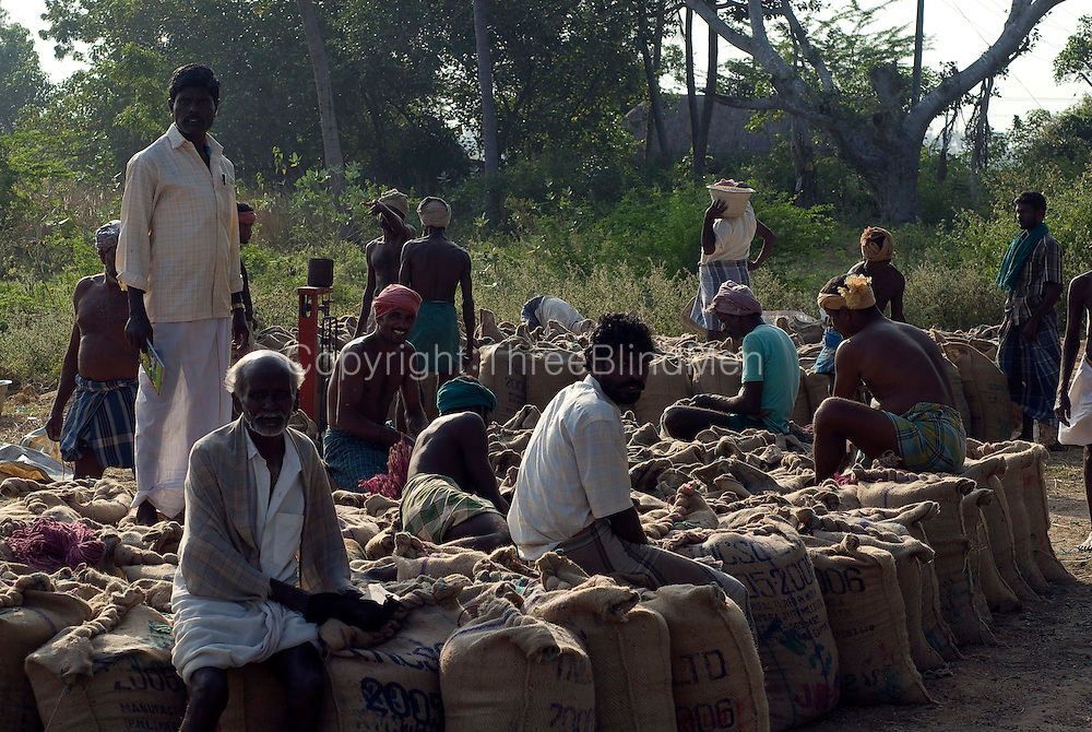 India. Men seated on sacks of rice. Harvest season