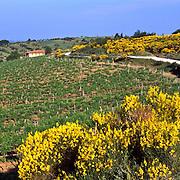 Dirt road from Volpaia to Panzano, Chianti, Tuscany