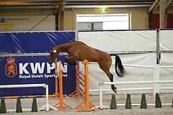 083 - Gin Gin Balia SMH<br /> Vrijspringen 3 jarige merries<br /> KWPN Paardendagen - Ermelo 2014<br /> © Dirk Caremans
