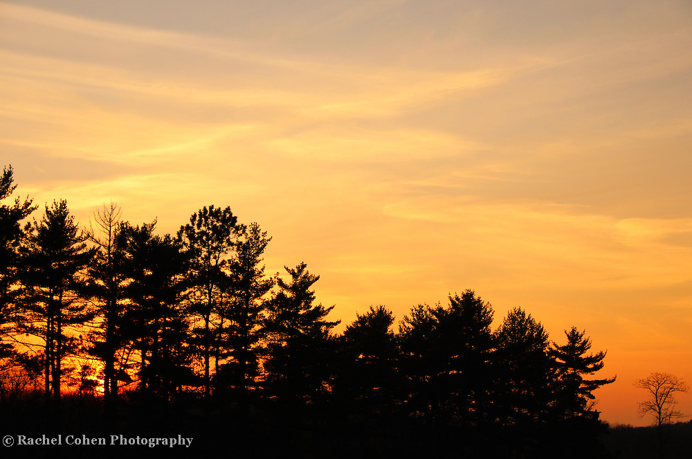 &quot;Sunset in the Pines&quot;<br />
