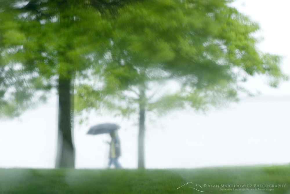 Single person with umbrella walking through waterfront park in the rain, Bellingham Washington