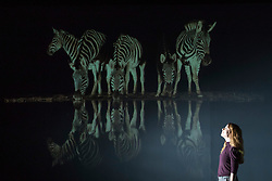 The world-renowned Wildlife Photographer of the Year exhibition, on loan from the Natural History Museum in London, returns to Edinburgh, opening at the National Museum of Scotland on Friday 19 January 2018 until 29 April 2018.<br />  <br /> Taking over the Museum's largest exhibition gallery for the first time, this will be the only Scottish venue for the exhibition. The 100 extraordinary images celebrate the diversity of the natural world, from intimate animal portraits to astonishing wild landscapes.<br /> <br /> Pictured: The Nightcap by Charl Senekal