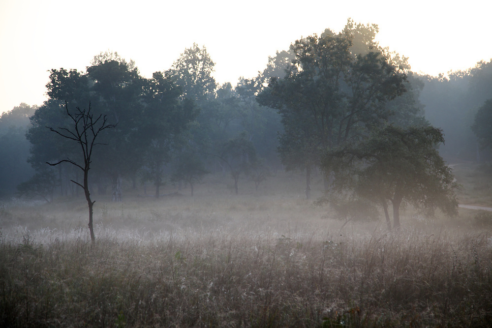 Misty Morning in Kanha National Park, India