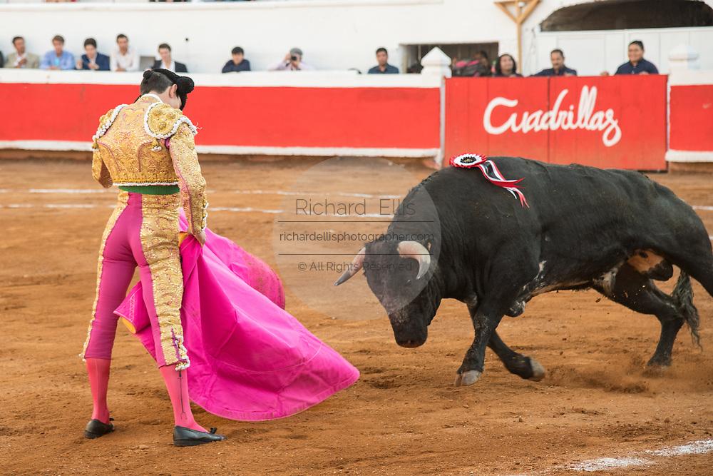 Mexican Matador Arturo Macias presents his cape to the bull as it charges during a bullfight at the Plaza de Toros in San Miguel de Allende, Mexico.