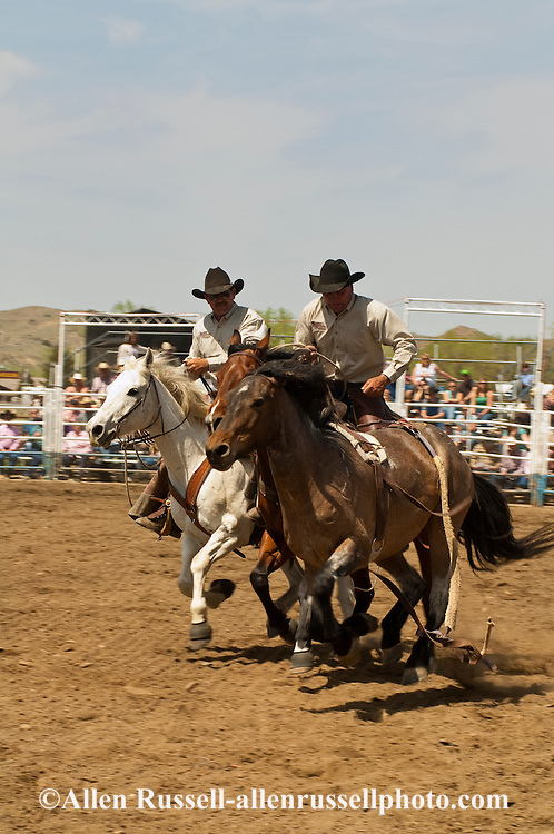 Pickup men Kyle Shaw and Lynn Ashley pick up bareback bronc, Miles City Bucking Horse Sale, Montana, <br /> MODEL RELEASED