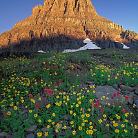 Mount Clements and wildflowers. Logan Pass area, Glacier National Park, Montana.