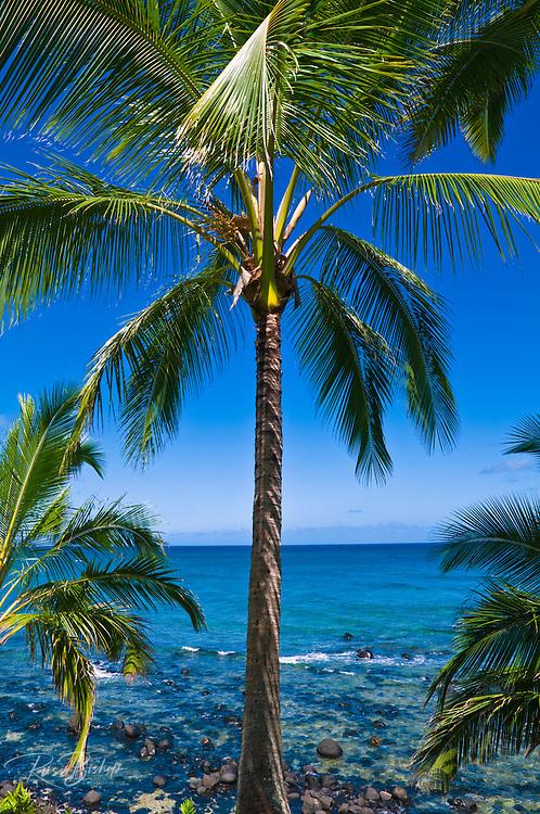 Coconut palms and blue Pacific waters from Hideaways Beach, Island of Kauai, Hawaii