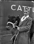 10/12/1957<br /> 12/10/1957<br /> 10December 1957<br /> Christmas Fat stock show at Dublin Cattle Market.