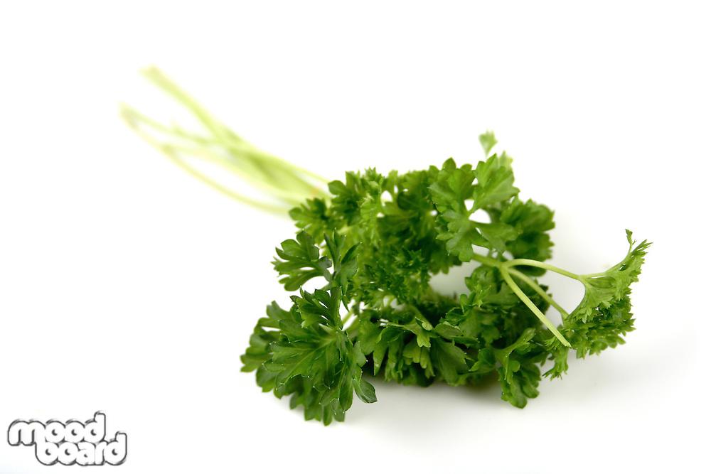 Studio shot of fresh parsley