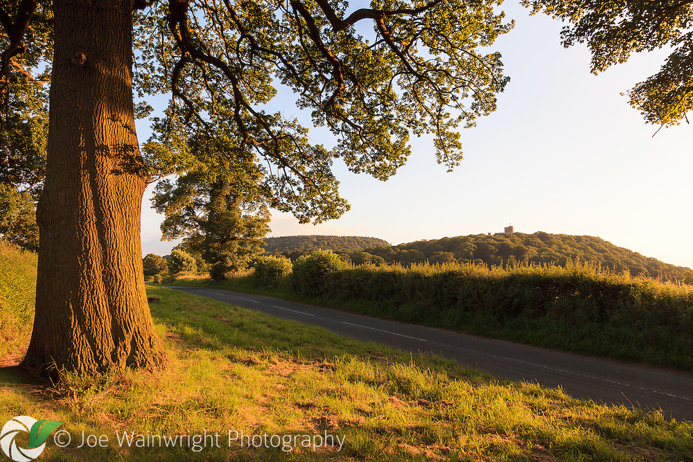 A Cheshire Oak frames a view of Peckforton Castle, from a peaceful country road, near the village of Beeston.