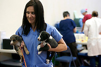 MCDERMITT, NV - AUG 16:  Ana Apostol a 2nd year student at UC Davis holds tow puppies during a clinic sponsored by the Humane Society of the United States August 16, 2009 in McDermitt Nevada.  (Photograph by David Paul Morris)