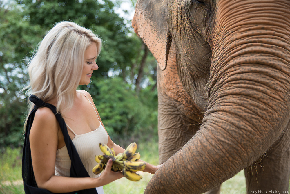 Samui Elephant Sanctuary located in Bophut, Koh Samui Thailand