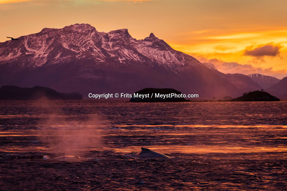 Magallanes, Chile, June 2017. On board of expedition ship Forrest we sail to the Francisco Coloane Marine Park where we kayak with Humpback whales and then explore the fjords on to the Sarmiento Channel and several large glaciers. <br /> Covering the stormy southern tip of the Americas, the province of Magallanes is not connected to by road to the rest of Chile. Photo by Frits Meyst / MeystPhoto.com