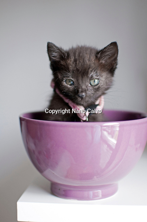 1 month old black kitten inside of a purple bowl