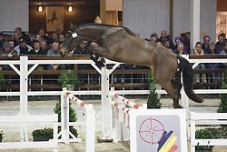 026 - Monaco Optimus<br /> Hengstenkeuring BWP - Azelhof - Koningshooikt 2015<br /> ©  Dirk Caremans