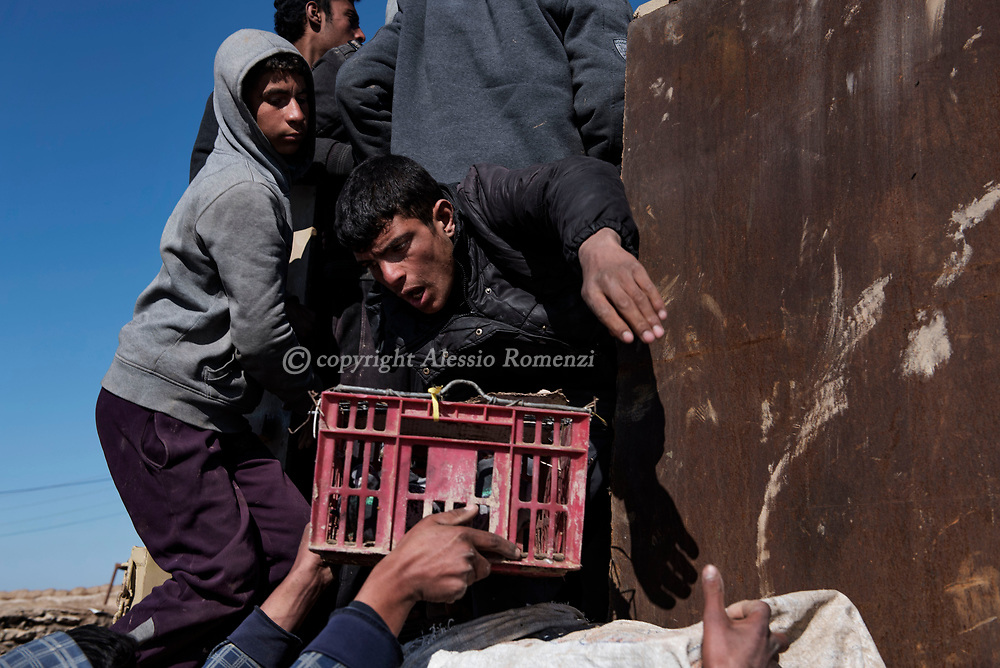 Iraq: In Kaysumah village, Iraqis displaced from Mosul load onto trucks for transportation to IDP camps. Alessio Romenzi