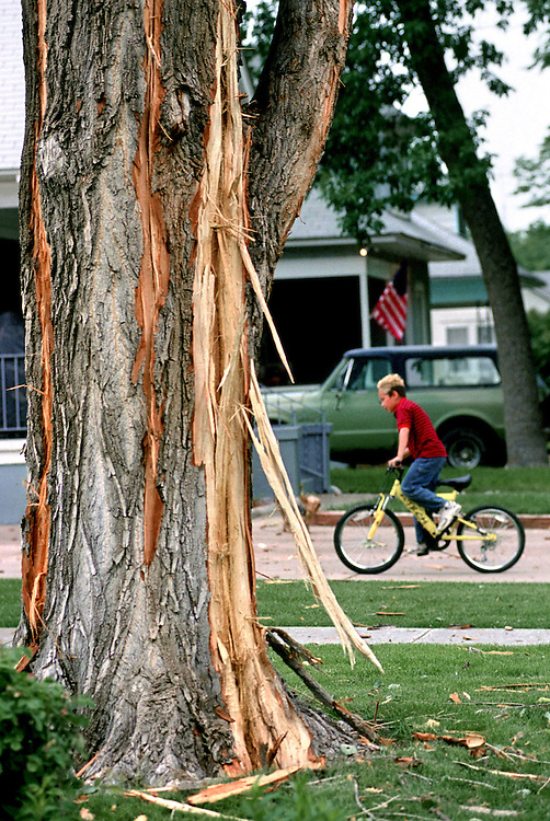 Boy rides his bike past a tree that was hit by a lightning strike