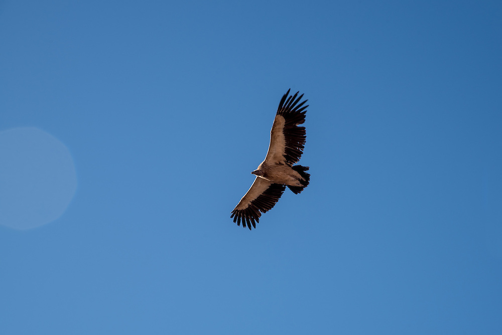 An eagle flies through the sky in Golok region, Tibet (Qinghai, China).
