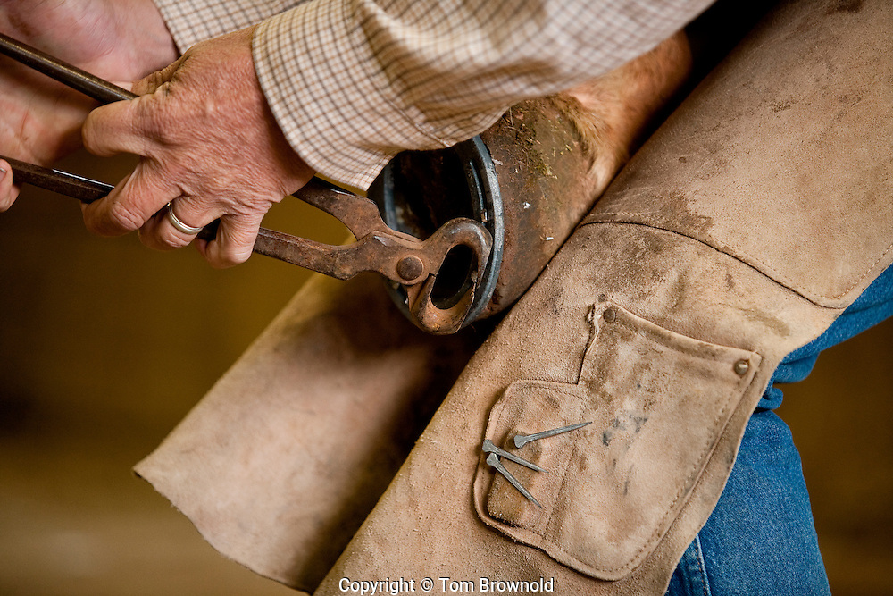 Putting new shoes on a Mule sometimes requires more than one try to get the nails in just right.