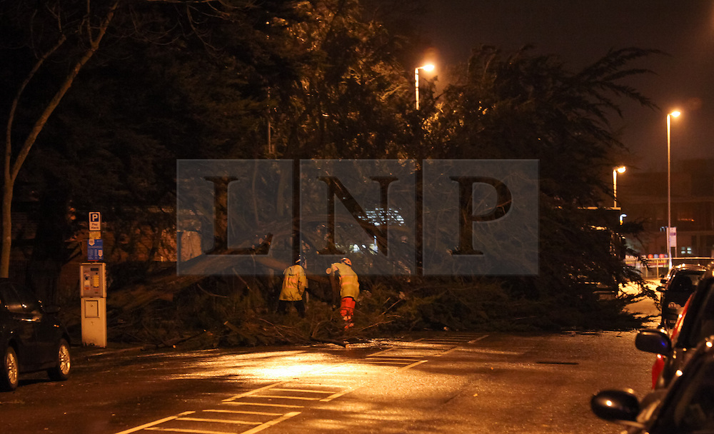 © Licensed to London News Pictures. 14/02/2014. Southsea, Hampshire, UK. A fallen tree on the A288, Hampshire Terrace, in Southsea, Hampshire, UK. Strong winds have battered the south coast, with hurricane force 12 winds being forecast. Photo credit : Rob Arnold/LNP