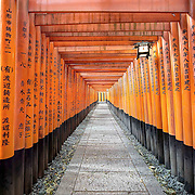Fushimi Inari Shrine in Kyoto is situated at the top of a 4km path leading up a steep hill. These huge orange gates (or torii) line the entire path and the earliest of them were built in 711. To me it's a miracle of ancient engineering as the gates are the size of huge logs.<br /> <br /> The inscriptions on the sides of the gates are the names of donors who paid millions of yen to have their families permanently remembered on the route to the shrine.