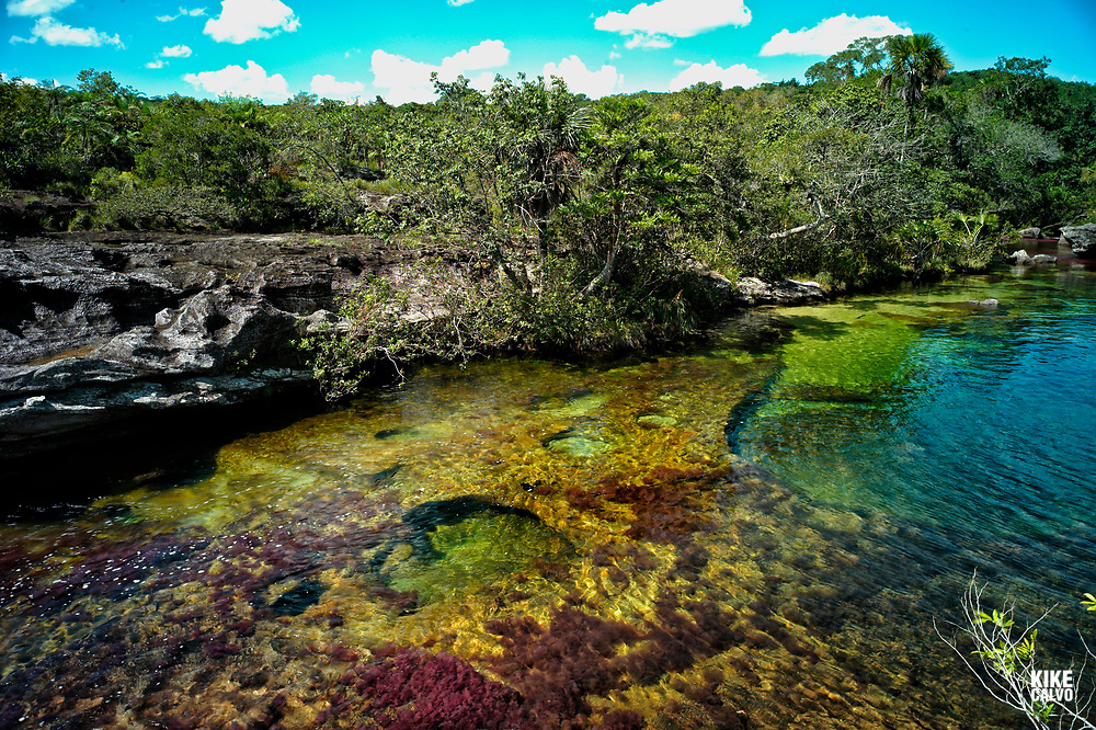 Colorful endemic freshwater plants known as macarenia clavigera create colorful natural tapestries at Los Ochos section of the Cano Cristales river, commonly called the River of Five Colors or the Liquid Rainbow.