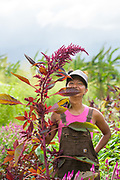 Laarni Gedo is a farmer (and sometimes artist) on the North Shore of O'ahu. She grows cut & edible flowers as Petal to the Mettle at Counter Culture Organic Farm in Hale'iwa. She also grows medicinal plants that she uses to craft wellness products such as tinctures, balms, oil infusions, and teas. Some of her favorite flowers to grow are marigold, butterfly pea, and amaranth for their to-dye- magic and beauty, but none has electrified her senses as much as her favorite herb, Spilanthes.