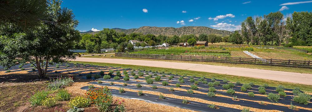 chatfield butterfly ranch house lavendar garden lavender garden