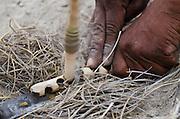 Kalahari Bushmen making fire<br /> Makgadikgadi Pans, Kalahari Desert<br /> Northeast BOTSWANA<br /> HABITAT &amp; RANGE: