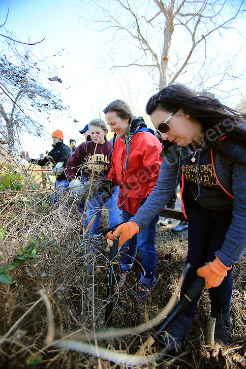 (From Right) Angela Gucciardo, of Woodhaven, Chelsea Niles, of Laingsburg,  and Kassie Van Alst, of Cadillac, clean up overgrown vegetation along the James River. Chippokes Plantation State Park in Surry, Va., has been the destination for a state park preservation project for 10 Central Michigan University students this week on their Alternative Break. They have been doing garden work, trail and building maintenance and cleanup at the state park on the James River. At the end of the work day they meet in their residence, once a former slave cabin, to reflect on the highs and lows of the day's experience. Photo by Steve Jessmore/Central Michigan University