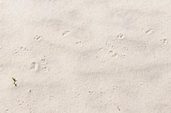 White Sands National Monument, Alamogordo, New Mexico