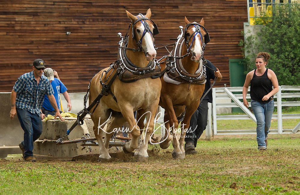 Bruce and Ruthanne Durgin of Deerfield compete with their team during the horse pulling event at Tilton-Northfield's Old Home Day on Saturday.   (Karen Bobotas/for the Laconia Daily Sun)