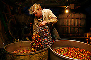 Laurent Delaporte washes apples to be used for the production of cider. Emanville, Upper Normandy, France, Friday, Jan. 4, 2008.