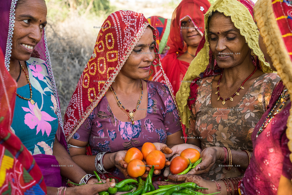 A group of women who are a part of Technoserve's kitchen garden program, pose for a group portrait in a kitchen garden in Bamanwali village, Bikaner, Rajasthan, India on October 24th, 2016. Non-profit organisation Technoserve works with farmer's wives in Bikaner, providing technical support and training for edible gardening, to improve the nutritional quality of their food and relieve financial stress on farming communities. Photograph by Suzanne Lee for Technoserve