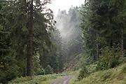Waldweg, Wald am Kickelhahn, Thüringer Wald, Thüringen, Deutschland   forest on Kickelhahn, Thuringia, Germany