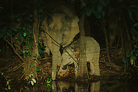 Mother and baby Borneo Pygmy Elephant (Elephas maximus borneensis) drink at a stream.