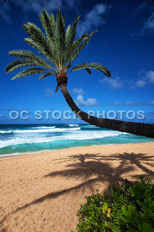 Crooked Palm Tree on the Beach in Hawaii
