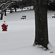 &quot;Seeing Red&quot; 2<br /> <br /> A bright sight on snowy day! A wonderful shiny red fire hydrant in a snow filled winter scene!<br /> The image is done in black and white with selective color on the red fire hydrant!!<br /> <br /> Winter in Michigan by Rachel Cohen Winter in Michigan!<br /> <br /> Beautiful winter scenes, winter wonderlands, and lone trees in winter!<br /> <br /> Images in color, B&amp;W, and using selective color.<br /> <br /> If you love winter, snow, trees, rolling hills, and lone trees then you'll find a lovely selection!! <br /> <br /> Winter in Michigan by Rachel Cohen