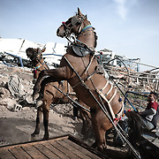 "A horse rears in front debris of a destroyed building following Israel's 22-day offensive in Gaza on January 26, 2009 in the northern Gaza Strip district of Jabalia. A senior EU official touring Gaza blasted the ""abominable"" destruction in the enclave and said its ""terrorist"" Hamas rulers bear overwhelming responsibility for the war."