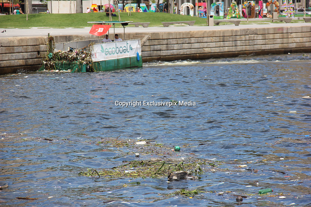 March 4, 2016 - Rio De Janeiro, BRAZIL - Rio de Janeiro, 04 March 2016: <br /> <br /> Olympic waters of Guanabara Bay has garbage and dead animal<br /> <br /> Rio 2016 Olympic Games, the Guanabara Bay waters are still unhealthy. This morning, the Guanabara Bay waters in Tomorrow's Museum vicinity were completely polluted with much floating junk and even with dead animals in advanced stages of decomposition. Inside the Museum was being held a conference on the Cop 21, which included the Minister of Environment of Brazil, Izabella Teixeira. <br /> ©Exclusivepix Media