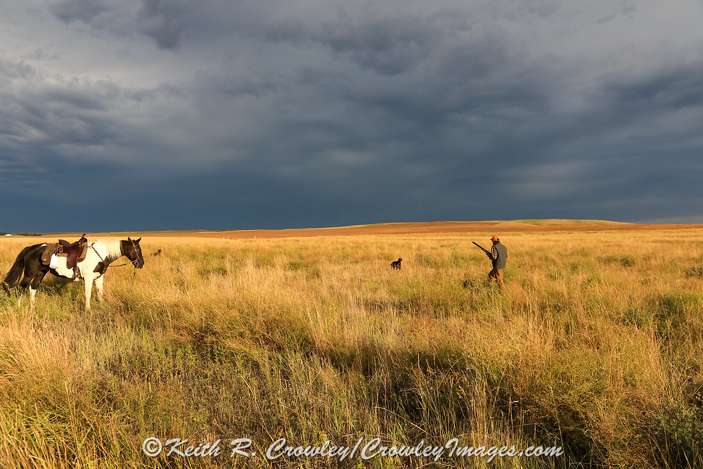 Storms clouds gather in the big Montana sky as John Zeman approaches his pointing GSP during a horseback  prairie grouse hunt.