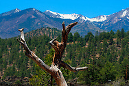 Branch of a fallen tree in the shape of a dancing figure - AZ