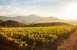 FOTÓGRAFO: Oliver Llaneza ///<br /> <br /> tarde veraniega en Viña Chada