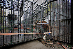 ROMANIA ONESTI 26OCT12 - A Eurasian  brown bear is transferred to a transport cage  at the Onesti zoo...The bear was rescued from the decrepit Onesti Zoo where it lived for 8 years in degrading conditions and will be transported to the Zarnesti bear sanctuary...jre/Photo by Jiri Rezac / WSPA