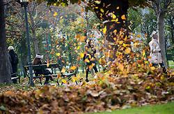 THEMENBILD - Herbstlaub Aufräumarbeiten im Wiener Volksgarten. Aufgenommen am 15.11.2016 in Wien, Österreich // Workers sweeping the leaves at Volksgarten during Autumn in Vienna, Austria on 2016/11/15. EXPA Pictures © 2016, PhotoCredit: EXPA/ Michael Gruber