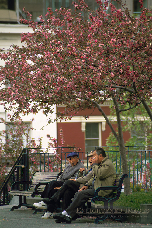 Chinese men on  park bench in Portsmith Square in Chinatown, San Francisco, California