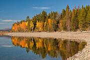 Reflections of autumn color along the shore of Jackson Lake, Grand Teton National Park, Wyoming