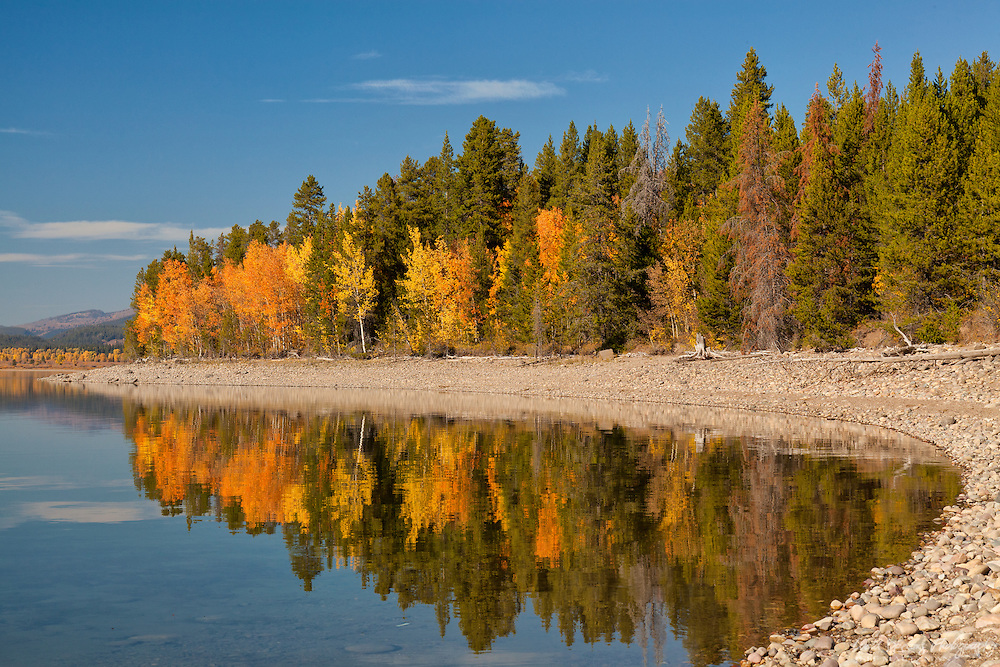 Reflections of autumn color along the shore of Jackson Lake, Grand Teton National Park, Wyoming