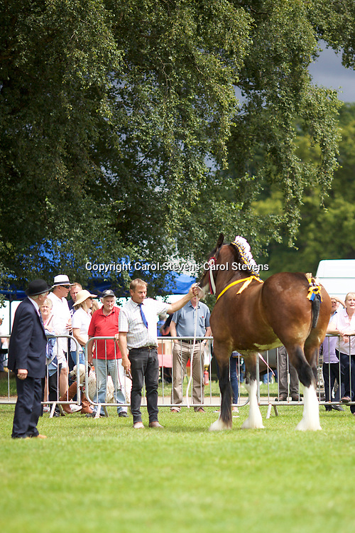 Paul Bedford's Gelding  ACLE THOMAS  3 years<br />